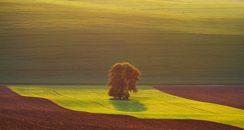 Moravia Toskani Morning greeting to the sunphoto preview