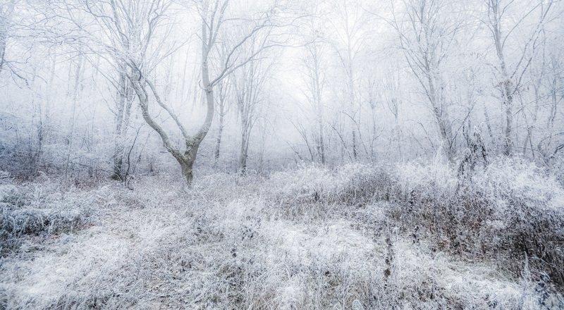 Холодокphoto preview