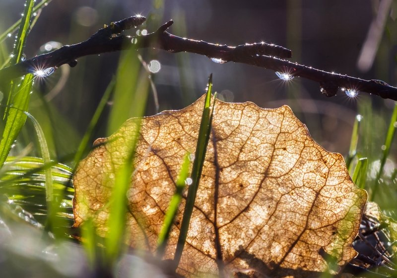 Капельки весныphoto preview