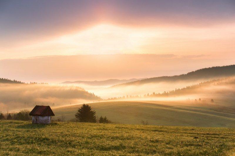 весна, горы, карпаты, май, туман, украина, утро Утро на Яворовымphoto preview