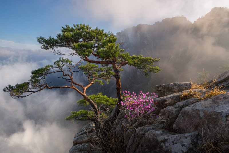 mountains,peak,hiking,fog,clouds,spring,light,korea,pine Dream dancerphoto preview