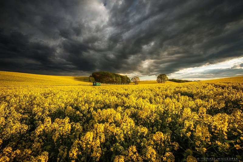 poland, polish, landscape, sunrise, sunset, colours, spring, awesome, amazing, adventure, travel, beautiful, morning, trees, bee, colza, fields, sky, storm, yellow After stormphoto preview