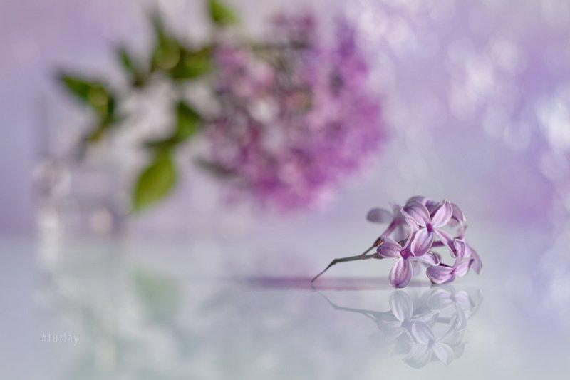 сирень, боке, гелиос 44, отражение Фантазия про цветки сирени с отражениемphoto preview