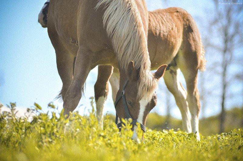 мать, дитя, лошадь, жеребенок, конь Мать и дитяphoto preview