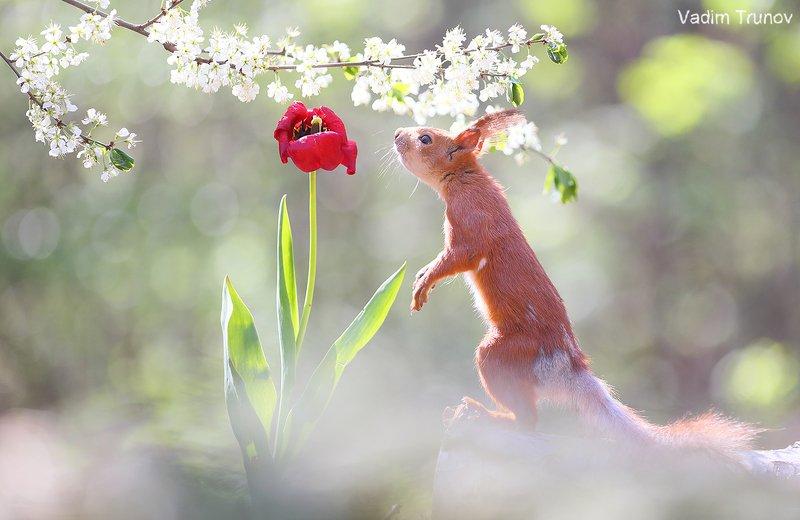 белка, весна, squirrel, сад, цветы Эдемский садphoto preview