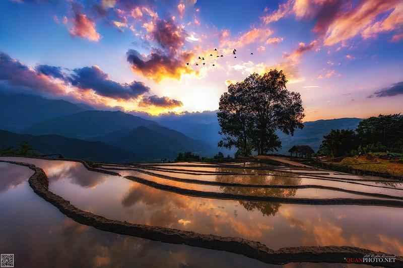 quanphoto, landscape, sunset, sundown, twilight, reflections, mountains, purple, valley, terraces, fields, highland, vietnam Purple Sunset Reflectionsphoto preview