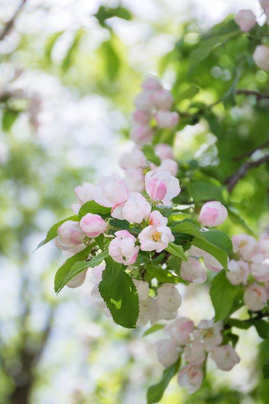природа, весна, цветы Весны волшебный ароматphoto preview