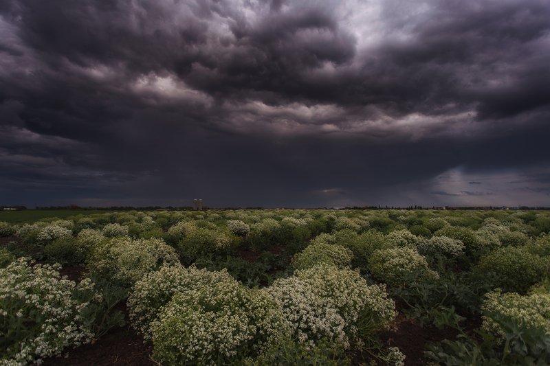 Россия,Краснодар,природа,кубань,юг Штормовое предупреждение photo preview