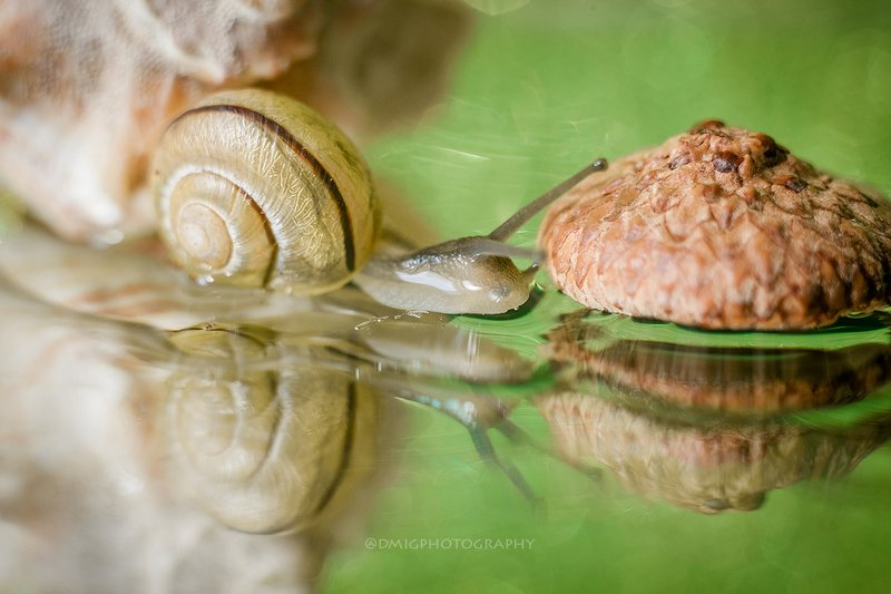 макро, улитка, природа, отражение ***photo preview