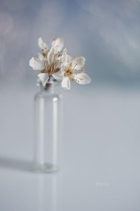 цветки сливы, гелиос 44, боке Немного апрельского минимализмаphoto preview