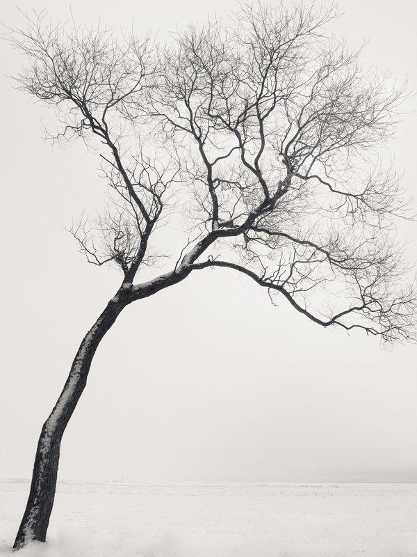 чёрно-белое, графика, петергоф, александрия В мечтах...photo preview