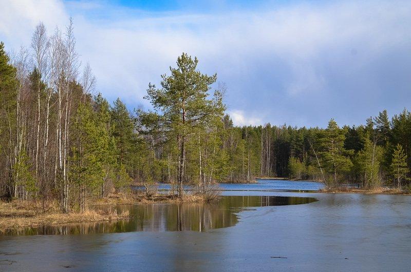 весна, озеро, ленобласть, заповедник, заказник, красиво,лес Поступь весны.photo preview