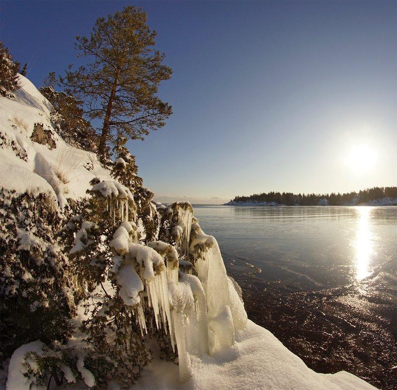 Ледяная соснаphoto preview