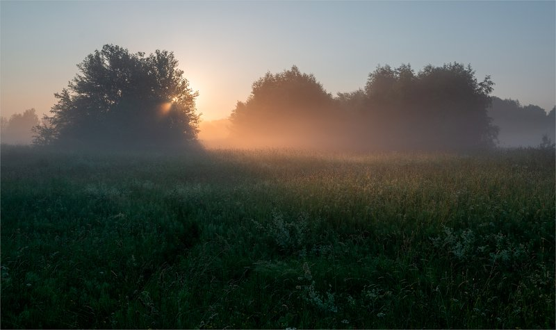 beauty of the morning meadow...photo preview