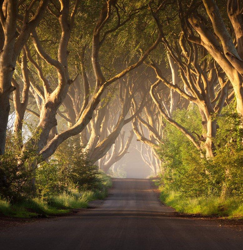 northern, ireland Dark Hedgesphoto preview