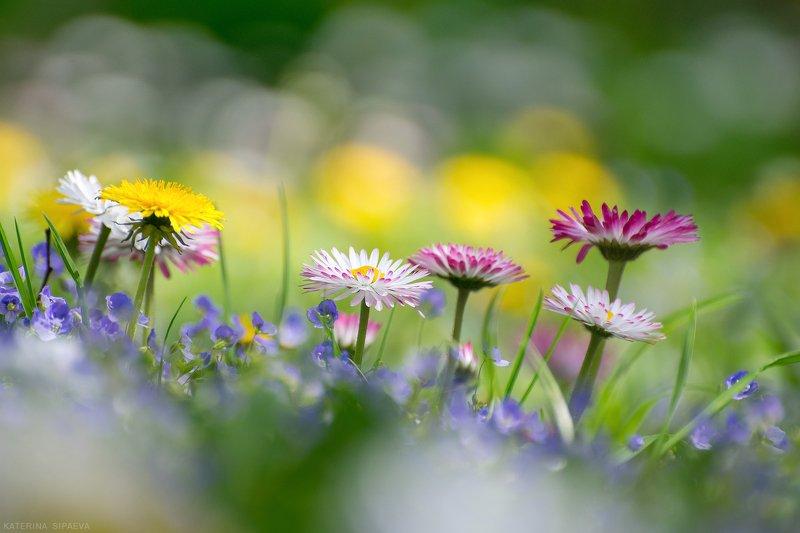 природа, весна, цветы Весеннее цветениеphoto preview