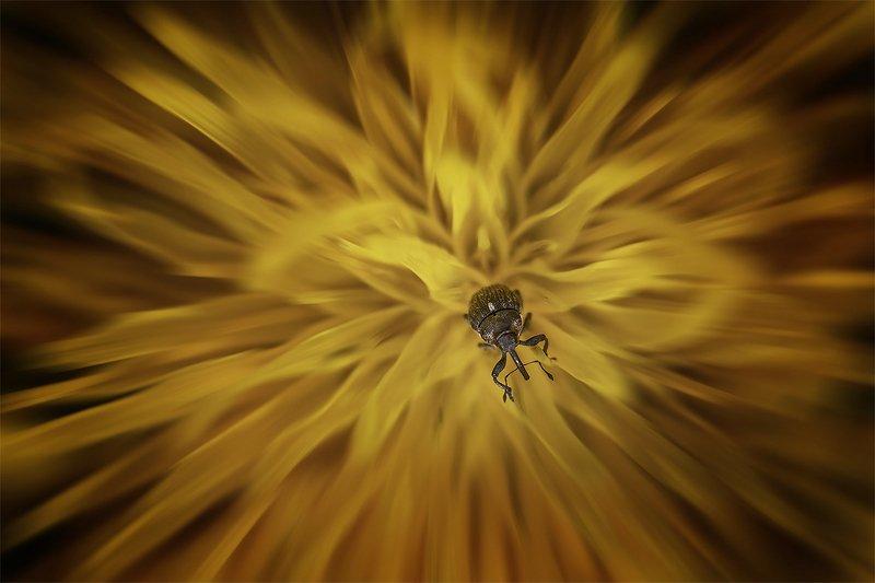 цветок, центр, жук Огненный цветокphoto preview