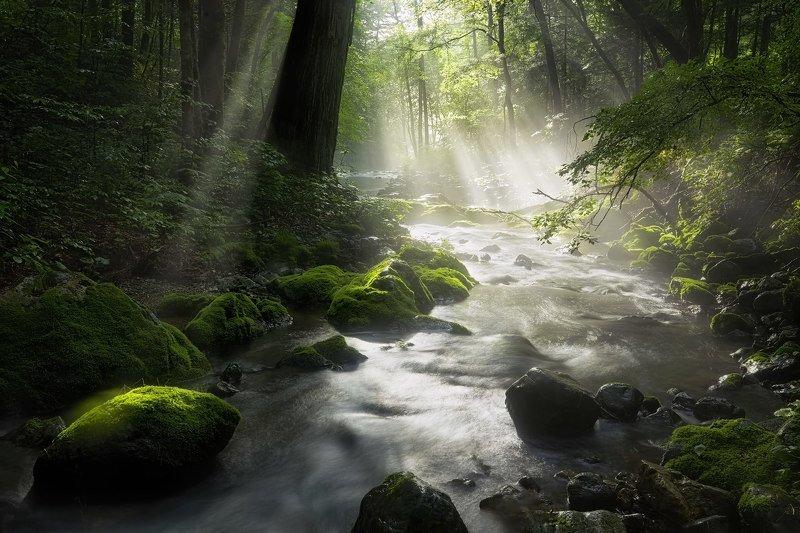 лето, ручей, тайга, приморский край, река таёжная ray of lightphoto preview