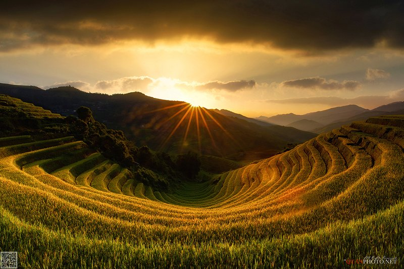quanphoto, landscape, sunset, sundown, rice, terraces, valley, twilight, farmland, agriculture, mountains, harvest, golden, rural, vietnam Golden rice terraces Sunset фото превью