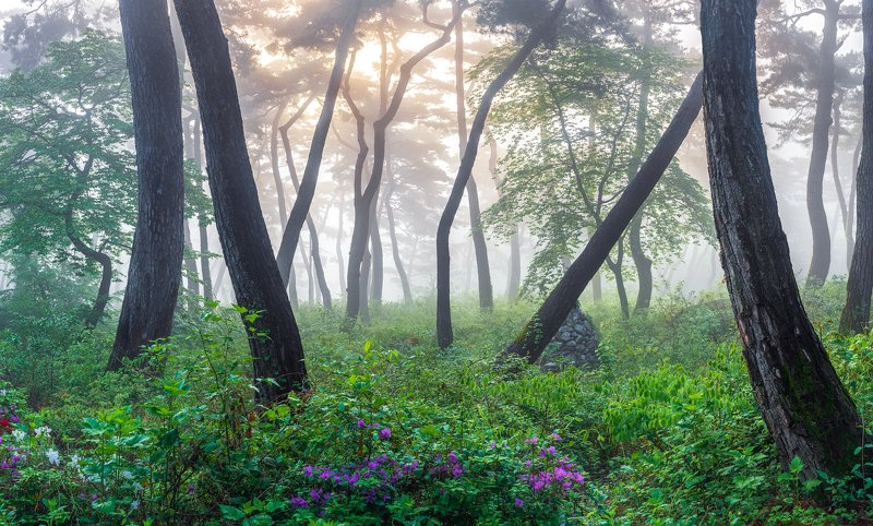 flower, spring, bloom, forest, place, korea, pine May\'s mist forestphoto preview