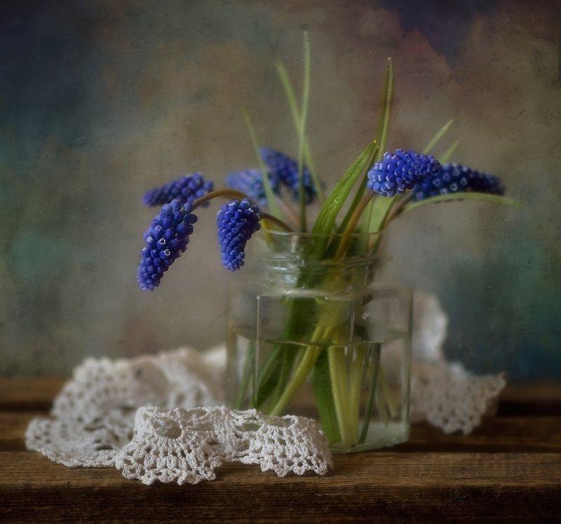 натюрморт,мускари,цветы,весна мускари... фото превью