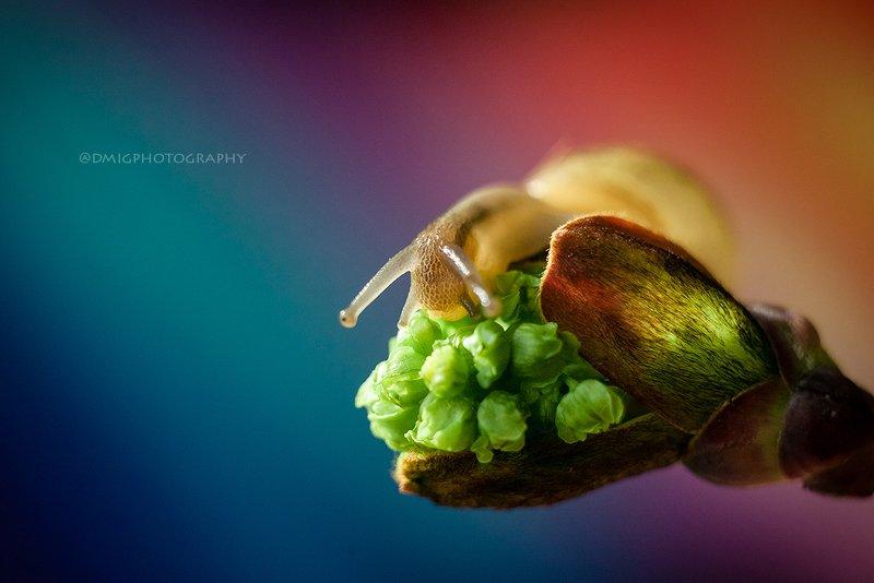 macro, snails, nature, улитка, природа, макросъёмка, макромир, colorsphoto preview