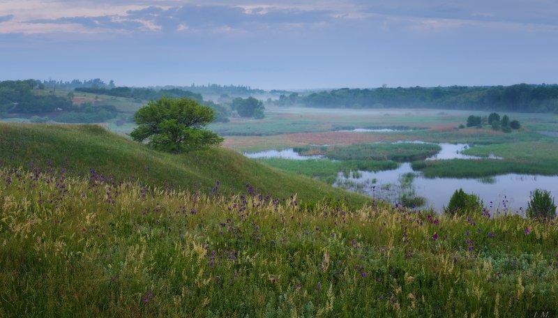 весна, утро, пейзаж, пруд, туман, холмы, шиповник, дерево, луг, травы, dawn, wet, panorama, morning, spring, fog, misty, landscape, hills, grass, meadow, lake, pond, water, foggy влажное майское утро ..photo preview