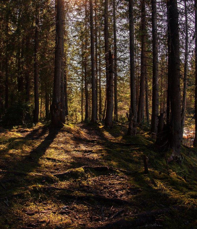 лес,природа Лесная атмосфераphoto preview