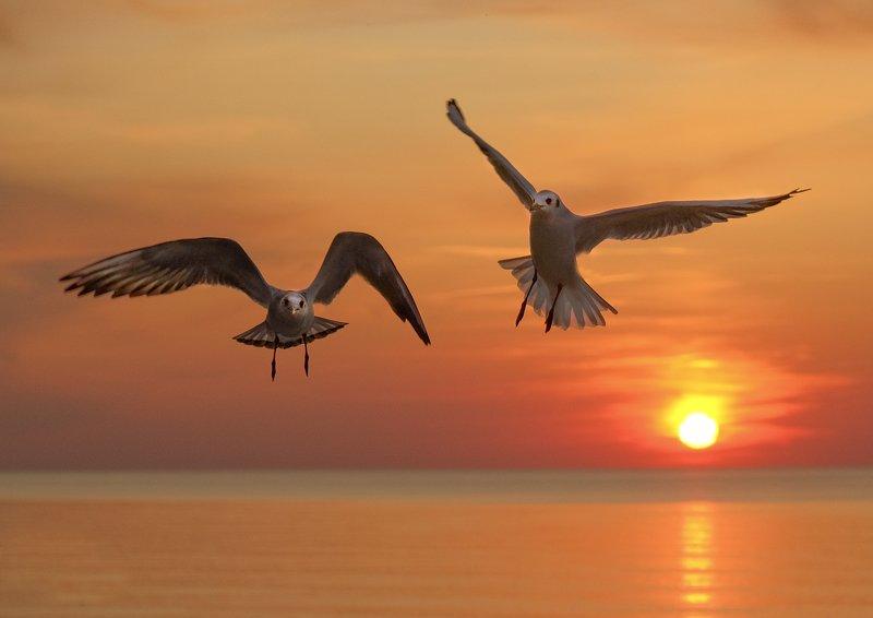 sea, sunset, birds, flight, beautiful, landscape, gulls at sunsetphoto preview