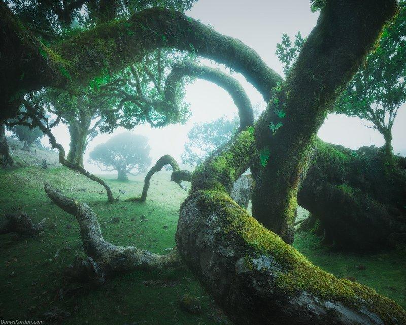 Madeira фото превью