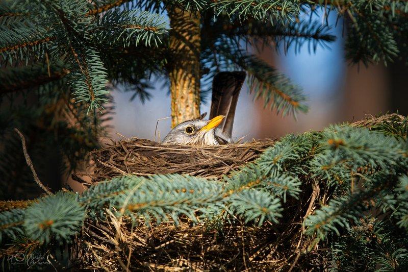 птах Птахphoto preview