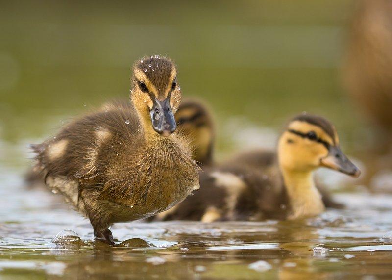 Duckphoto preview