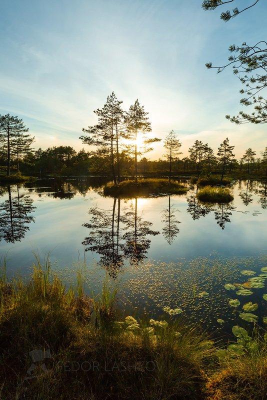 ленинградская область, закат, солнце, лето, сосна, озеро, болото, отражение, деревья, берег, листья, кубышка, остров, Сосны на островахphoto preview