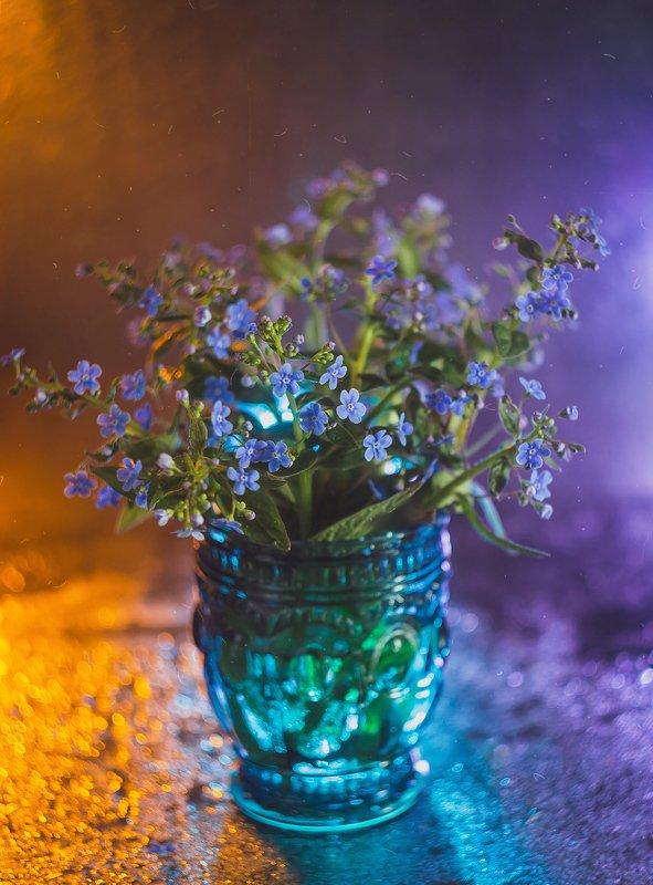 боке, натюрморт, фиолетовый, цветы, бутылка, стекло, красивый, прозрачный, блики, still life Цветные сныphoto preview