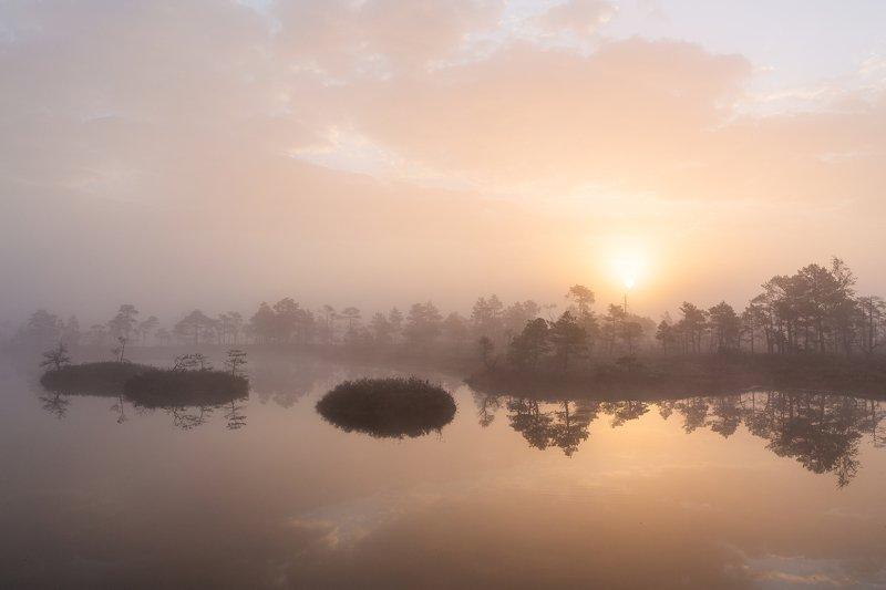 bog,marsh,swamp,lake,sunrise,forest,landscape,fog, Returnphoto preview