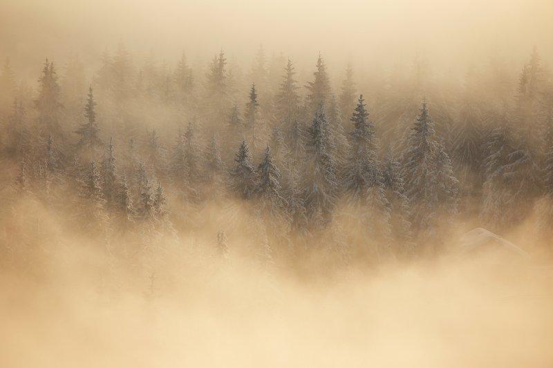 winter, trees, blizzard, snow, landscape, travel, nature, mountain, romania, cold, sunrise, fog Dream Morningphoto preview