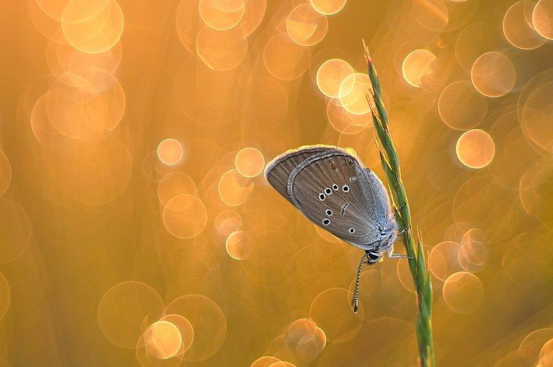 бабочки, природа, макро, минск, уручье Бабочкиphoto preview