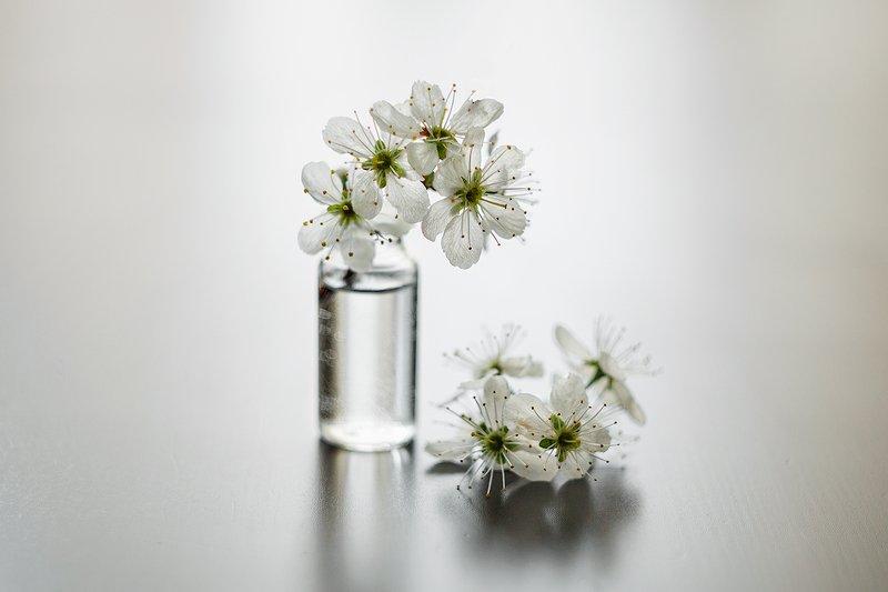 натюрморт цветы вишня белый макро Майский цветphoto preview