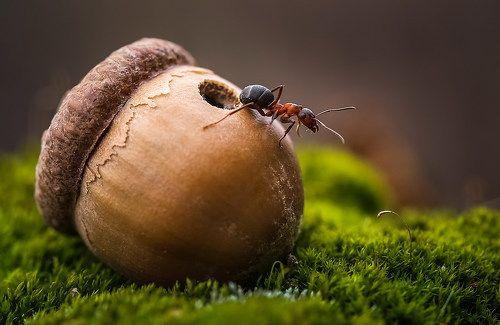 Из жизни муравьев