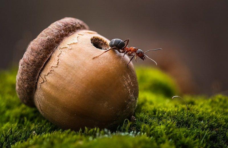 Из жизни муравьевphoto preview