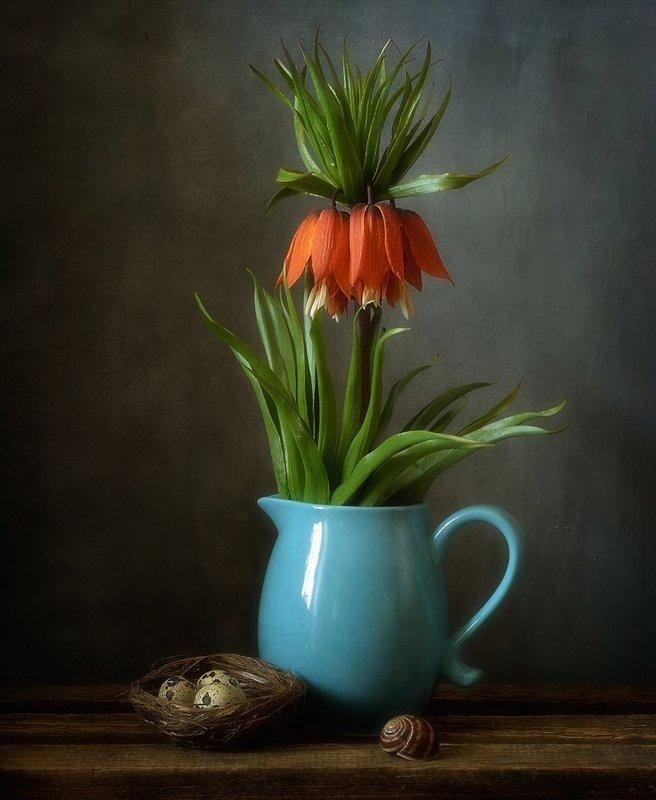 натюрморт,рябчик,цветы,весна,fritillaria imperialis Рябчик императорский) фото превью