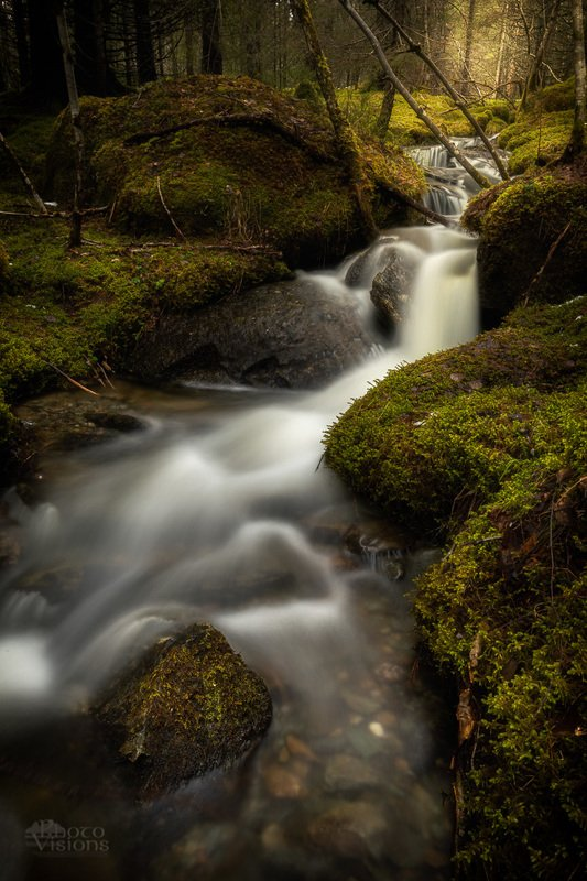 norway,boreal,forest,woodland,norwegian,moss,green,tree,trees,stream,river,flow,flowing,long exposure. Towards the lightphoto preview