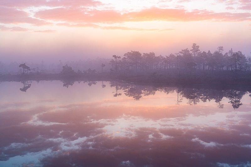 bog,swamp,marsh,pink,swamp,kemeri,latvia,landscapes,fog,sunrise,lake,forest,reflection Pink morningphoto preview