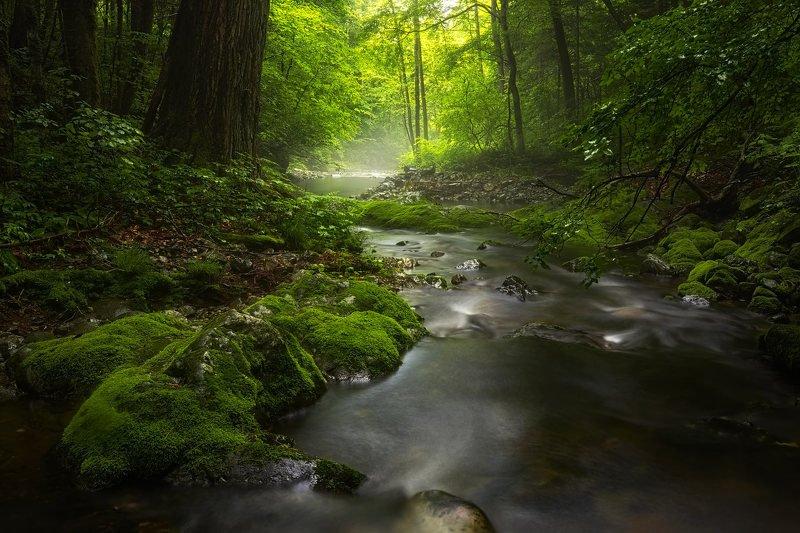дождь, лето, мох, приморье, ручей, свет, верховья реки, тайга летний ручейphoto preview