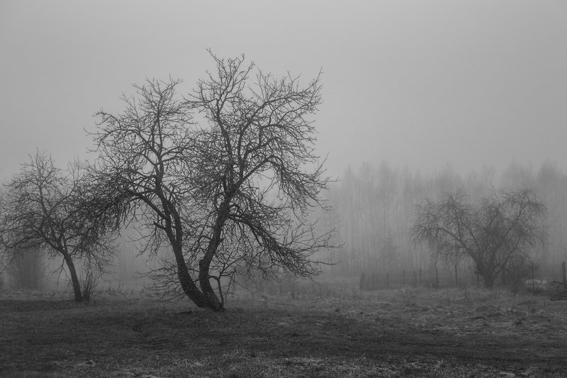 туман утро деревня деревья Утренняяphoto preview