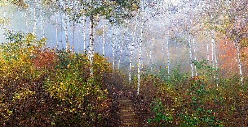 forest, autumn, place, korea, trees Birch narrow roadphoto preview