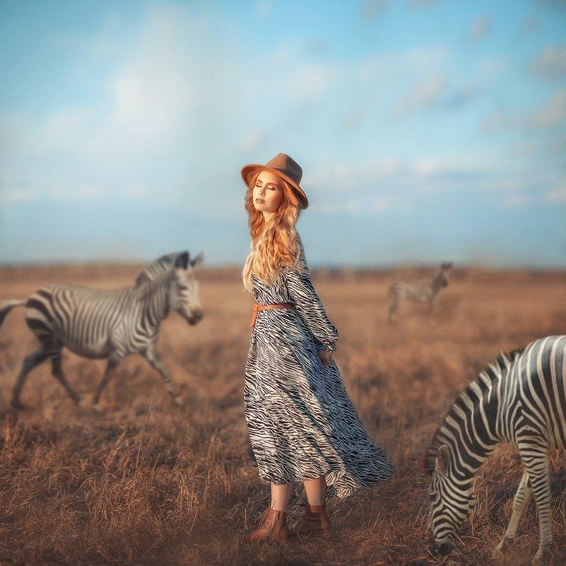 зебры, мечты, сказки Фантазииphoto preview