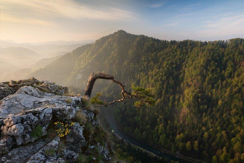 sunrise, sokolica, poland, pieniny, nature, landscape, light, morning Sunrise on Sokolicaphoto preview