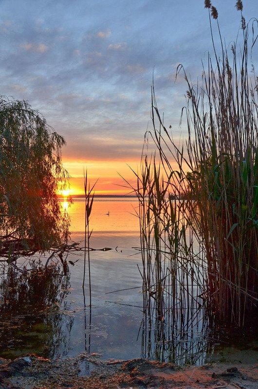 утро, рассвет, восход, весна, май, чомга Свидетель восходаphoto preview