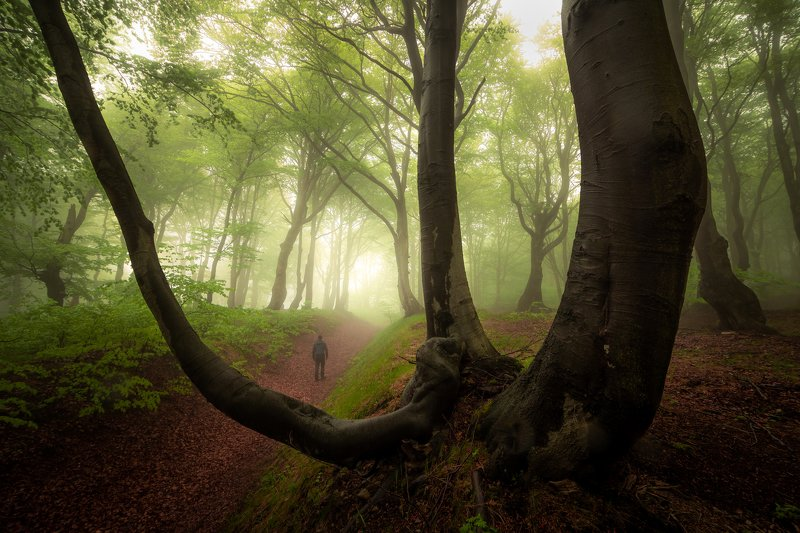 landscape, nature, forest, fog, mist, spring, tree, trees, person, czech republic, woodland In the forest of ghostsphoto preview